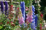 gardening advice on how to grow different types of flowers