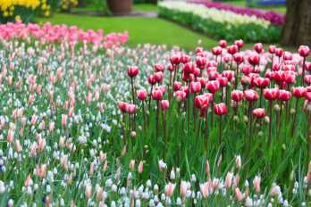 gardening tips for those starting a garden or the more experienced gardener