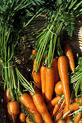 starting a vegetable garden and how to grow carrots