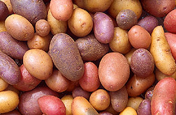 starting a garden and how to grow potatoes