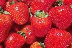 tips on how to grow strawberries and advice on  gardening flowers plants and trees