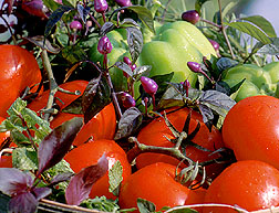 vegetable garden planting and how to grow tomatoes