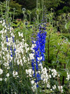 how to grow different types of flowers when starting a garden