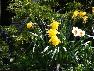 tips for starting a garden combining flowers and evergreens