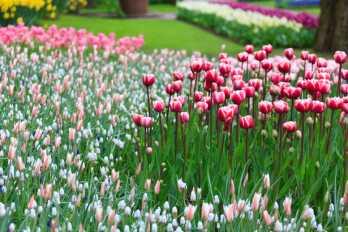 tips for starting a garden including starting a vegetable garden