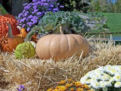 growing pumpkins is easy, learn how with our vegetable garden tips