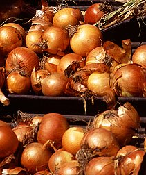 vegetable garden layout and how to grow onions