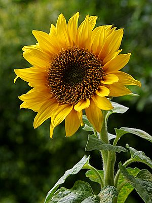 easy, understandable tips on growing many types of flowers